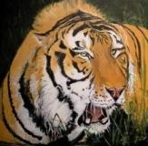 new tiger adjusted.JPG